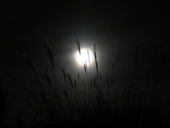 Full Moon through Cattails